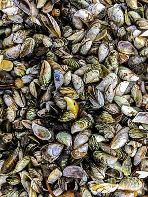 Photograph - Zebra Mussel Shells by William Norton