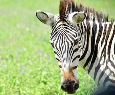 Olympic Sports - Zebra by Omar Shafey