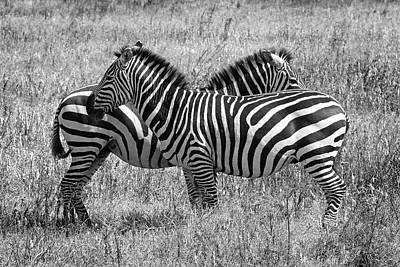 Photograph - Zebra Pair In Africa by Gill Billington