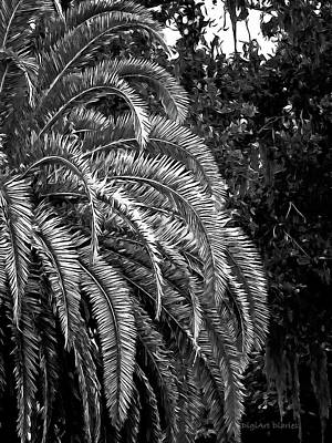Photograph - Zebra Palm by DigiArt Diaries by Vicky B Fuller