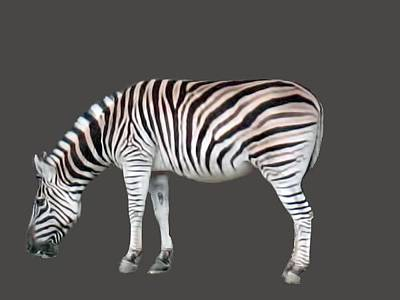 Photograph - Zebra by Pamela Walton