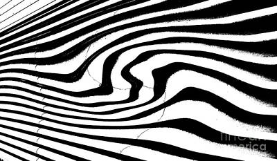 Zebra Pattern   Black And White Art Print by Mark Hendrickson