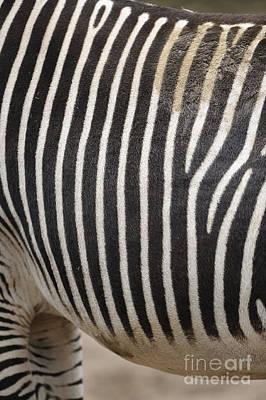Zebra Pattern Art Print