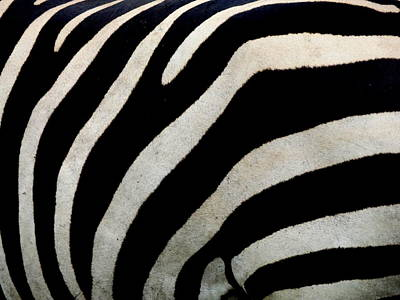 Photograph - Zebra Pattern by Julie Pappas