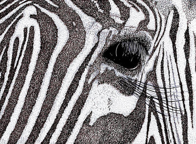 Eyes Detail Drawing - Zebra Portrait by Karl Addison