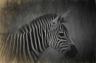 Zebra Photograph - Zebra Portrait Photo Sketch by Artful Imagery