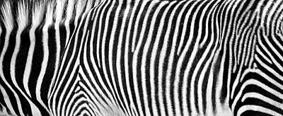 Photograph - Zebra Print Black And White Horizontal Crop by Susan Schmitz