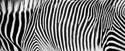 Photograph - Zebra Print Black And White Horizontal Crop by Susan Schmitz
