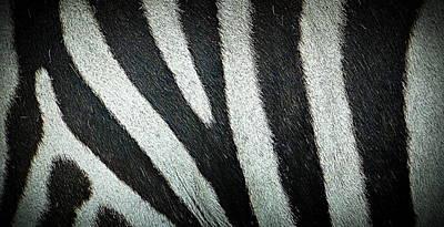 Photograph - Zebra Print by David Mckinney
