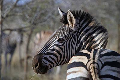 Art Print featuring the photograph Zebra by Riana Van Staden