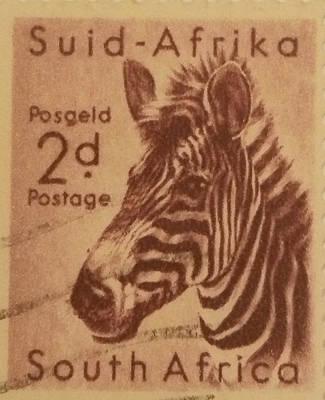 Zebra Safari Original
