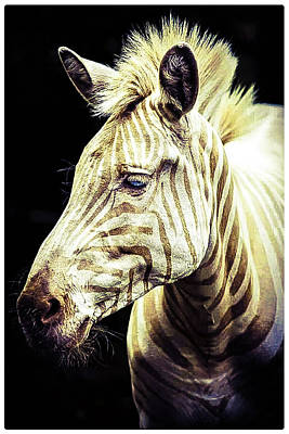 1-war Is Hell Royalty Free Images - Zebra Royalty-Free Image by Shirley Anderson