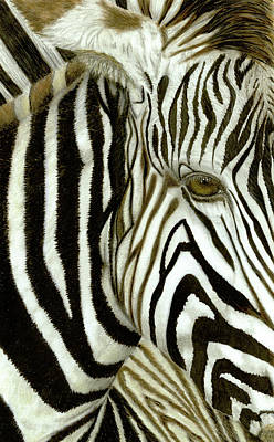 Drawing - Zebra Spirit by Claire Fagan
