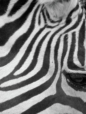 Photograph - Zebra - Stripes - Bw 02 by Pamela Critchlow