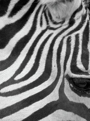 Photograph - Zebra - Stripes - Bw 02 by Pamela Critchlow