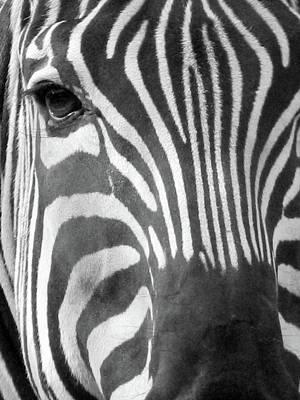 Photograph - Zebra - Stripes - Bw by Pamela Critchlow