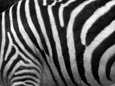 Photograph - Zebra Stripes by George Jones