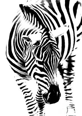 Photograph - Zebra Stripes by Hal Halli