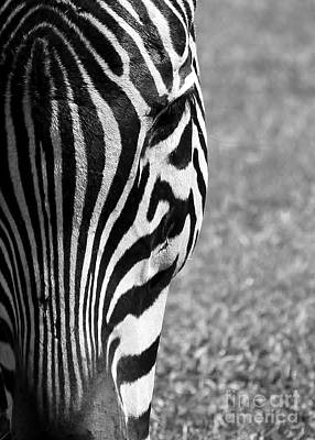 Delray Beach Photograph - Zebra Stripes by Sabrina L Ryan