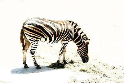 Photograph - Zebra Stripes by Stephen Mitchell