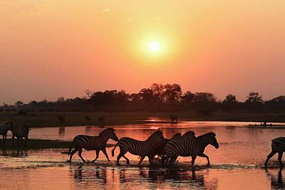 Photograph - Zebra Sunset by Kay Brewer