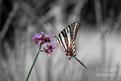Photograph - Zebra Swallowtail Butterfly And Stripes by Karen Adams