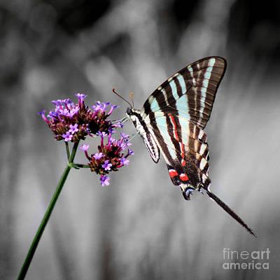 Photograph - Zebra Swallowtail Butterfly Stripes Square by Karen Adams