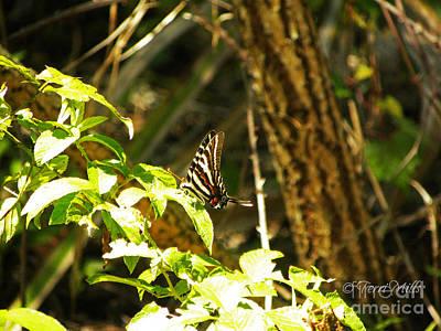 Photograph - Zebra Swallowtail Butterfly by Terri Mills