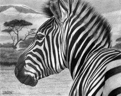 Elephant Pencil Drawing Drawing - Zebra by Tim Dangaran