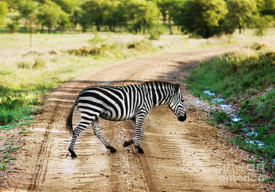Zebra Photograph - Zebra Walking On Road On African Savanna. by Michal Bednarek