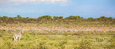 Digital Art - Zebra Watching Springbok Stampede by Liz Leyden
