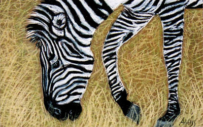 Pastel - Zebra Zebra by Jan Amiss