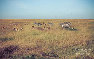 Photograph - Zebras And Gazelles by Cami Photo
