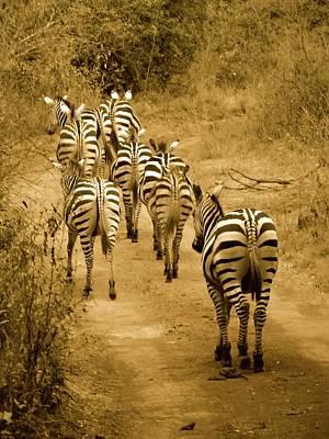 Exploramum Wall Art - Photograph - Zebras Heading Home - Antique by Exploramum Exploramum