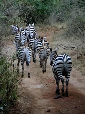 Exploramum Wall Art - Photograph - Zebras Heading Home - Full Colour by Exploramum Exploramum