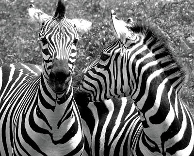 Southwick Photograph - Zebras In Black And White by Susan Lafleur