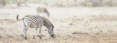 Photograph - Zebras In Dreamy Scene - Horizontal Banner by Susan Schmitz