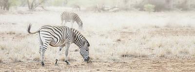 Zebras In Dreamy Scene - Horizontal Banner Art Print