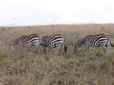 Exploramum Wall Art - Photograph - Zebras In Kenya 2 by Exploramum Exploramum