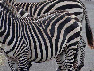 Exploramum Wall Art - Photograph - Zebras In Kenya 4 by Exploramum Exploramum
