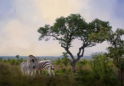 Photograph - Zebras In Kruger by Maria Coulson