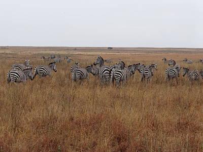 Exploramum Wall Art - Photograph - Zebras In The Grass - Pastel by Exploramum Exploramum
