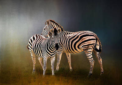 Photograph - Zebra Pair by Maria Coulson