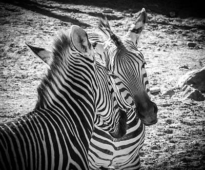 Photograph - Zebras by Mary Lee Dereske