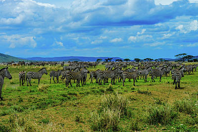 Photograph - Zebras On The Serengeti by Marilyn Burton