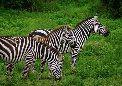Photograph - Zebras Trio by Dennis Cox WorldViews