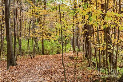 Photograph - Zebulon Norton Trail by William Norton