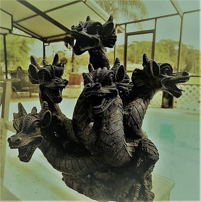 Photograph - Zeke Dragons Pool Fun by Belinda Lee