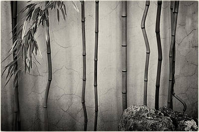 Photograph - Zen Bamboo And Rock by Peter V Quenter