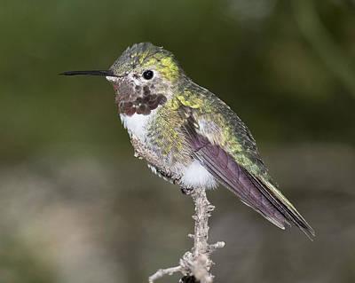 Photograph - Zen Bird by Chris Featherstone